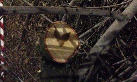 Il primo messaggio inequivocabile dal ramo di una quercia abbattuta